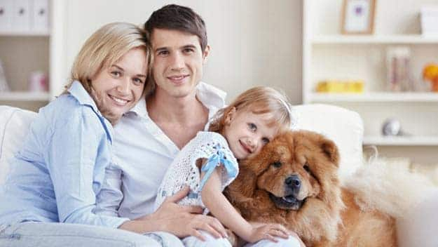 Wills & Trusts dog-young-family Direct Wills Matlock